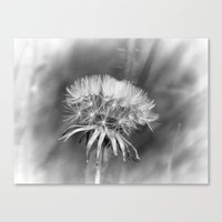 Tick Tock Dandelion Cloc… Canvas Print