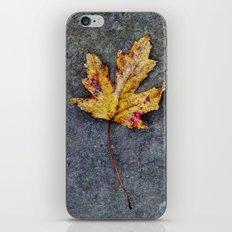 a leaf iPhone & iPod Skin