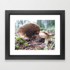 The Secret Life of Mushrooms - Ampitheatre Framed Art Print