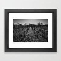 Napa Vines Framed Art Print