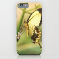 Exotic Butterfly natural beauty iPhone 6 Slim Case