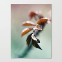 Nature Colors Canvas Print