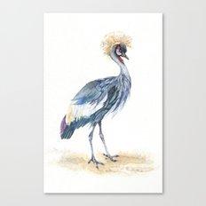 Grey Crowned Crane Bird  Canvas Print