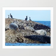 Art Print featuring Seal Pups, Seals  And Co… by Dan By The Sea