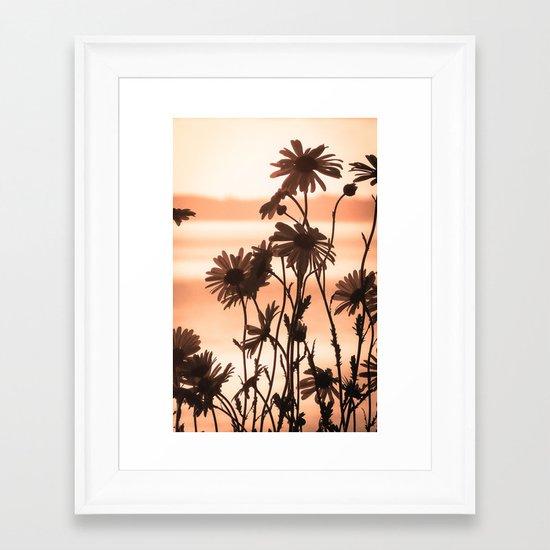 Dusk Daisies Framed Art Print