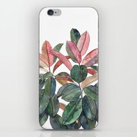 Rubber Plant iPhone & iPod Skin