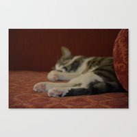 Cat Paws Canvas Print