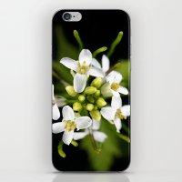 Tiny White iPhone & iPod Skin
