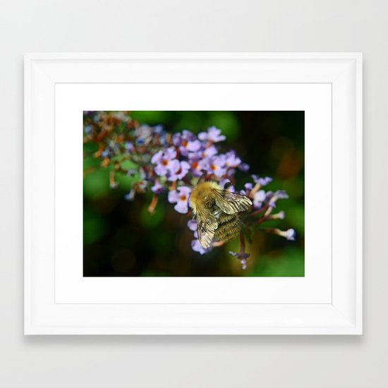Fluffy Bumble Framed Art Print