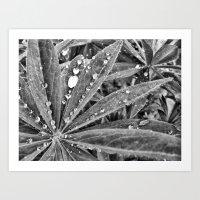 Pearls of Nature Art Print