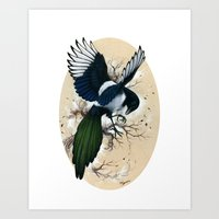 Resplendent Magpie Art Print