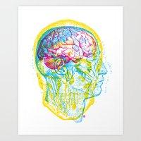 Anatomy Skull Art Print
