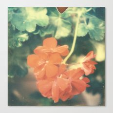 Red Begonia Canvas Print
