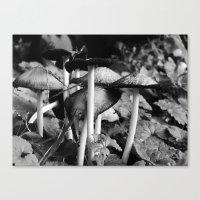 b&w mushrooms Canvas Print