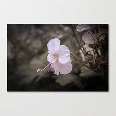 Delicate Reach Canvas Print