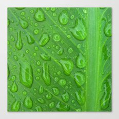 summer raindrops Canvas Print