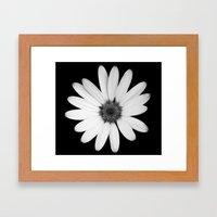 Greyscale Osteospermum Framed Art Print