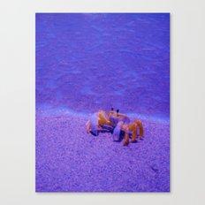 Crabby Chic Canvas Print