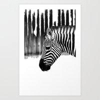 zebra Art Prints featuring Zebra by Regan's World