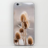 Thistles II iPhone & iPod Skin
