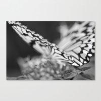 Flutter III  Canvas Print