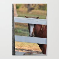 peeking Canvas Print