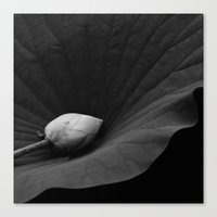 Bud on Lotus Leaf Canvas Print