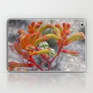 Orange Kangaroo Paw Flow… Laptop & iPad Skin