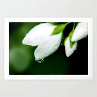White Water Drops Art Print
