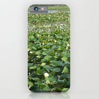 Amana Lilly Pond iPhone 6 Slim Case