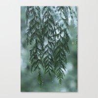 Nature's Drapery Canvas Print