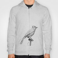 Albino Blue Jay - Square Format Natural History Bird Portrait Hoody