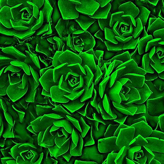 Succulent Green Canvas Print