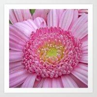 Pink Gerbera Macro I Art Print