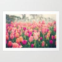 Tulips At Cheekwood Art Print