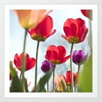 Tulip Series 5 Art Print