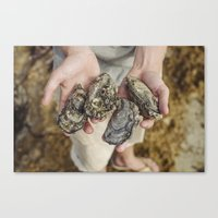 Wild oysters foraged from ocean Canvas Print