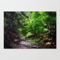 Burbank Creekbed Canvas Print