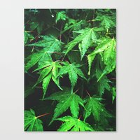 green love  Canvas Print