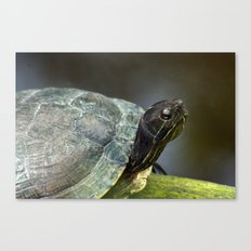 Turtle on a Log Canvas Print