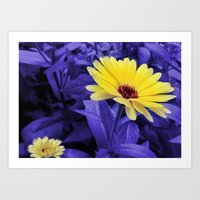Yellow To Purple Art Print