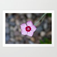 Purple Flower 1 Art Print