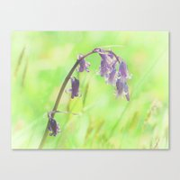 Bluebell Canvas Print
