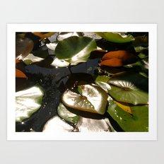 Frog and Lotus Leaves Art Print