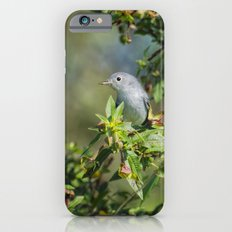 Blue-gray Gnatcatcher iPhone 6 Slim Case