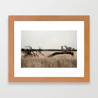 Cheetahs 2 Framed Art Print