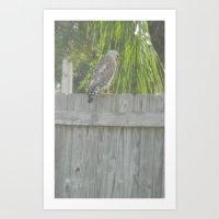 Falcon gazing Art Print