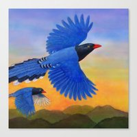 Taiwan Blue Magpie(1) Canvas Print