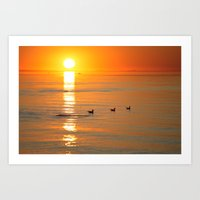 Seagull At Sundown Art Print