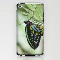 Birdwing Butterfly iPhone & iPod Skin